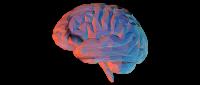Ilustracion 2 Programas Especiales Psicologia AutoSustentable