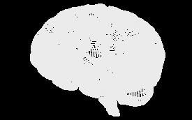 Por que funciona PAS Cerebro Psicologia AutoSustentable